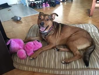 Dog saved from yard