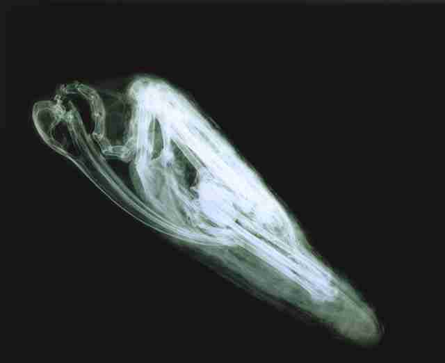 CT scan of ibis mummy from ancient Egypt