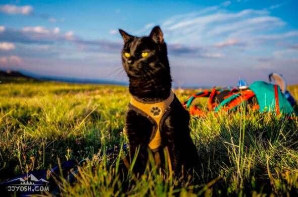 Adventure cat on camping trip