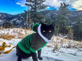 Cat in snowsuit