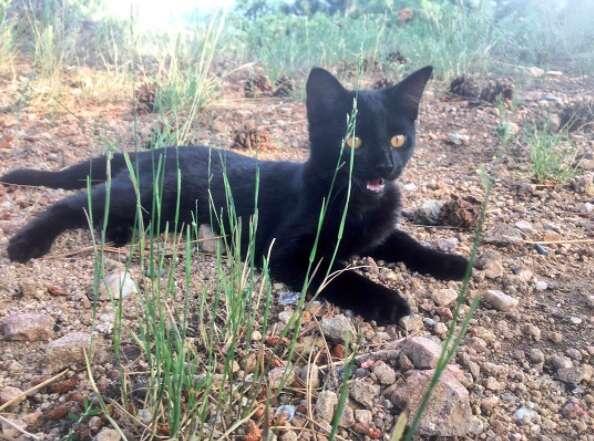 Kitten meowing outside