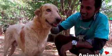 injured dog found on highway