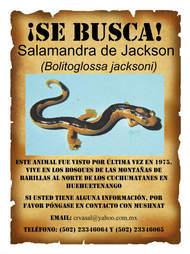 Most wanted sign for rare salamander