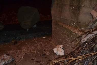Stray puppies on a dark street in Greece