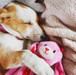 Dog snuggling with stuffed animal