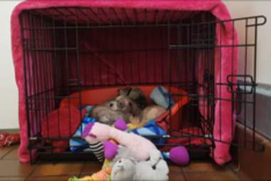Perdy and Pippin snuggle in the kennel at the RSPCA
