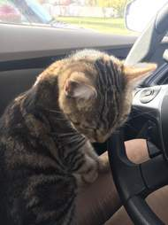 Stray cat in Salt Lake City climbs into woman's car