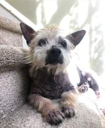 Hairless rescue dog sitting on steps
