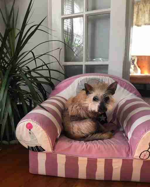 Dog resting on pink cushiony chair
