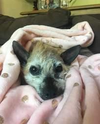 Rescue dog snuggled up in blanket