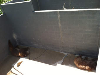Two bears at the Cherokee Bear Zoo try to get out of the hot sun