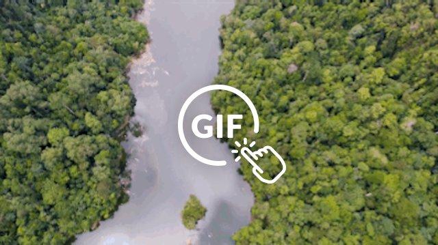 Orangutan habitat in Indonesia morphing into human industries like palm oil plantations