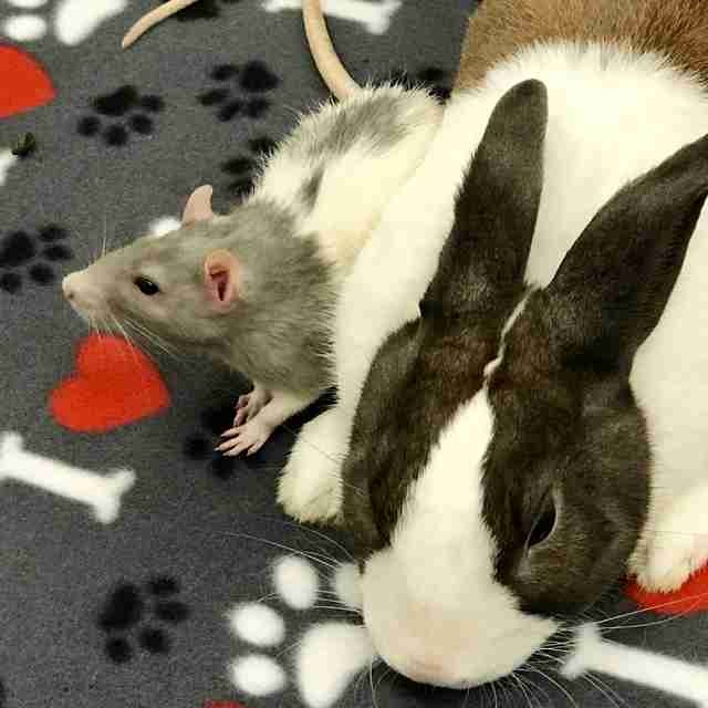 rat and bunny best friends
