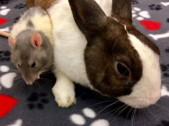 bunny and rat best friends