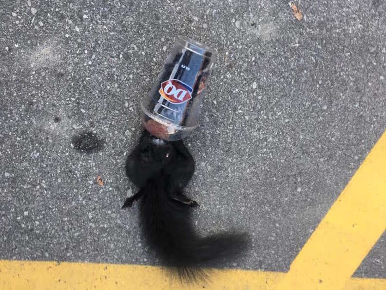 squirrel cup rescue littering