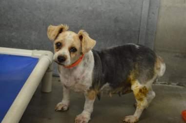 senior dog rescue puppy mill colorado