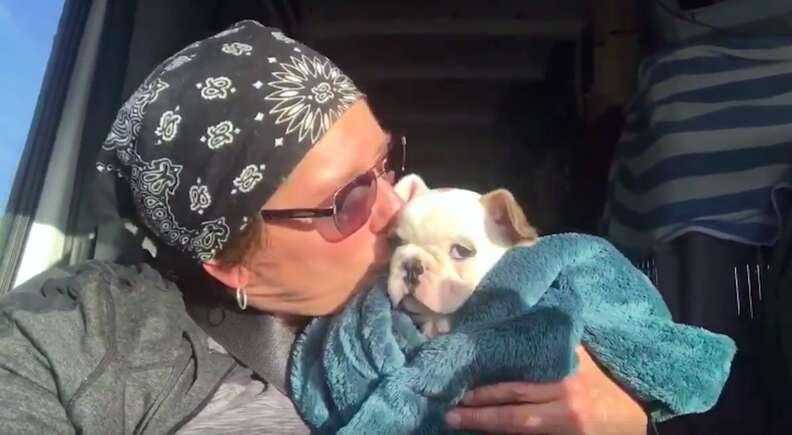 bulldog rescue puppy mill colorado