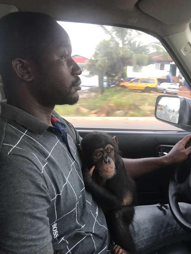 Baby chimp hugs rescuer in Liberia