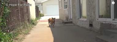 dog abandoned by his family