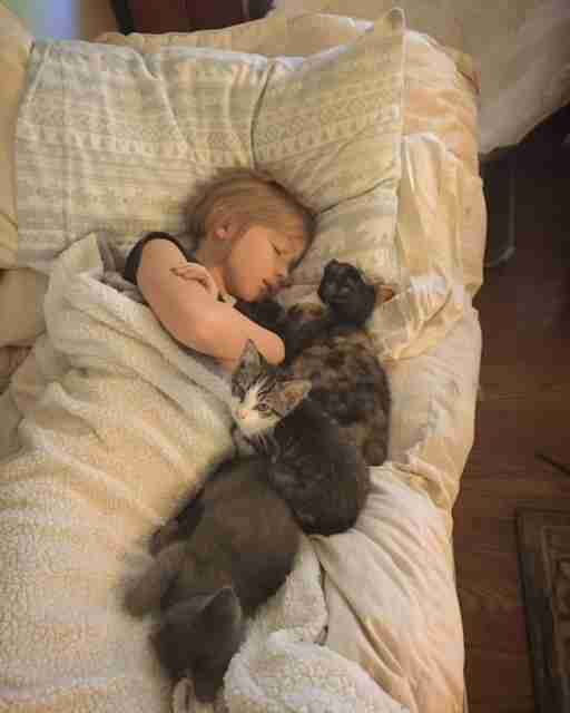 little girl sleeps with kittens