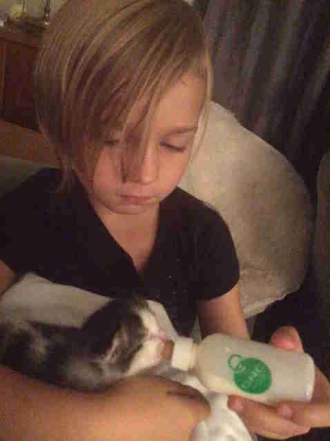 little girl bottle feeds a kitten