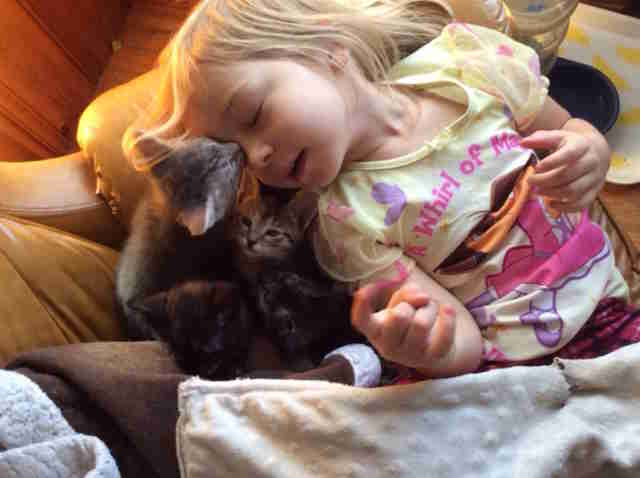 little girl snuggles with kittens
