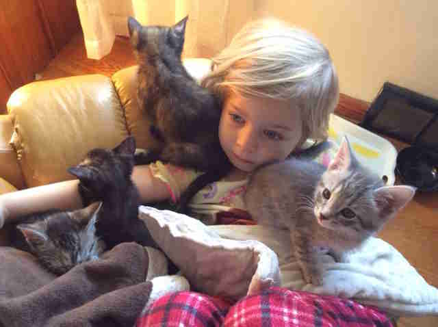little girl hangs out with kittens