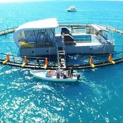 Ocean pool used to hold vaquita porpoises