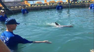 People in sea pen with captured vaquita