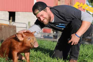 Man petting red-haired pig