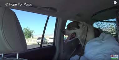 dog abandoned at a rest stop