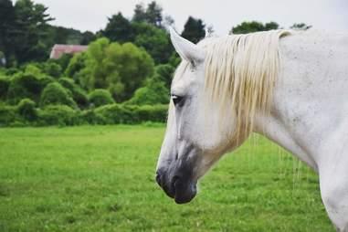horse rescue sanctuary pennsylvania