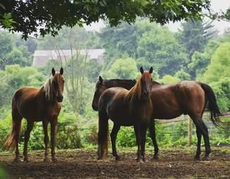 rescue horses sanctuary pennsylvania