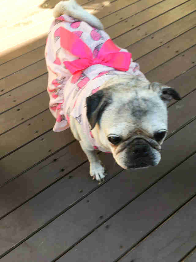 Rescue dog wearing pretty dress