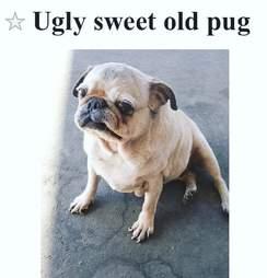 Online post selling senior pug