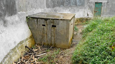 A crate containing a captive male adult sun bear