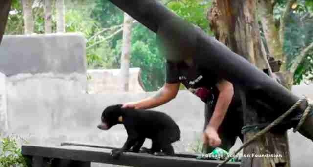Man roughly handling baby sun bear