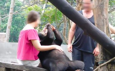 Tourists posing with captive sun bear