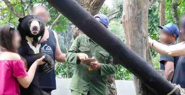 Tourists posing with captive sun bear