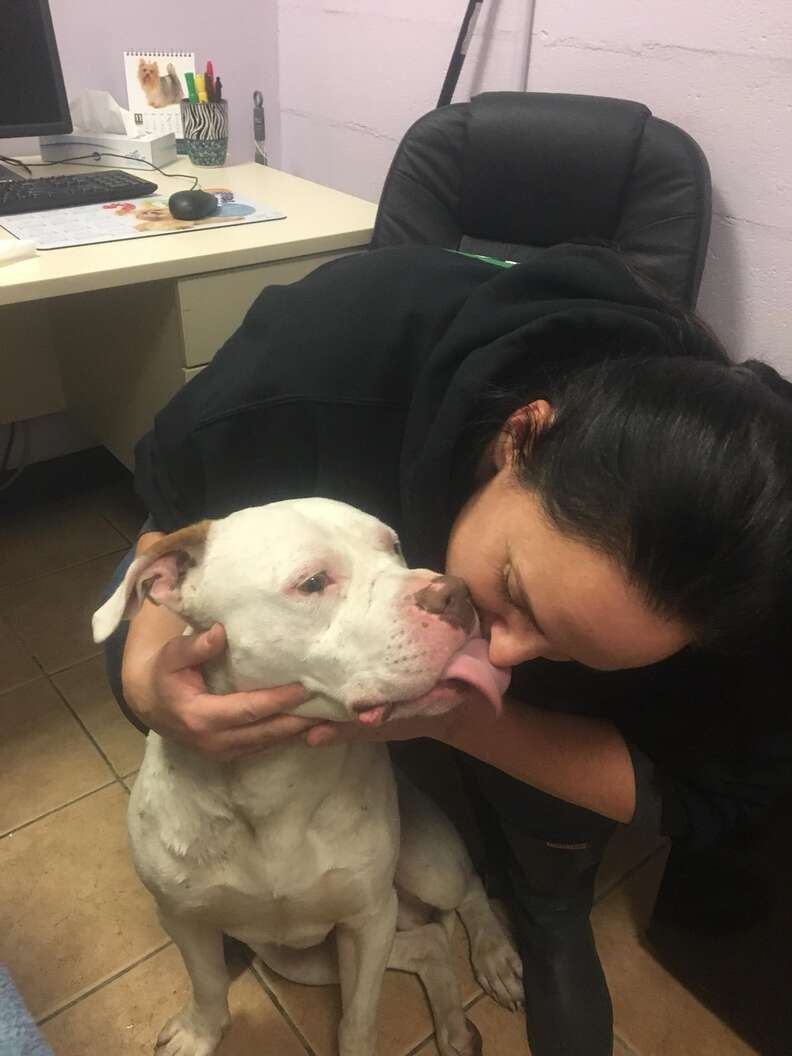 Dog who ran with coyotes kissing rescuer