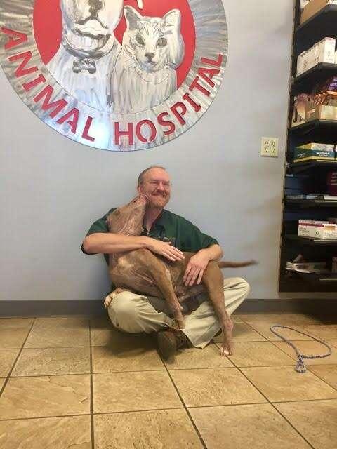 Dog kissing the vet who saved his life