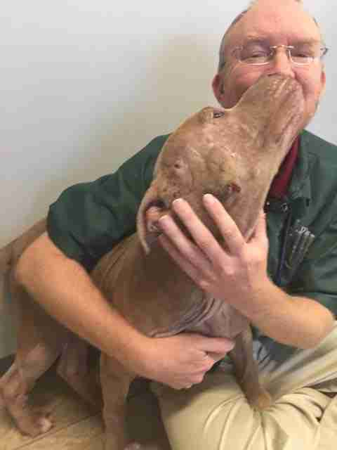 Dog kissing vet who saved his life