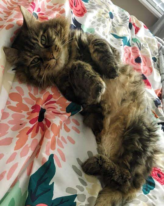 Rescue cat lying on back on top of bed