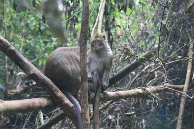 Rescued pet monkeys released into the wild in Indonesia