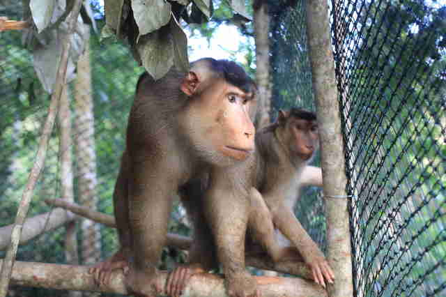 Monkeys rescued from being pets in Indonesia
