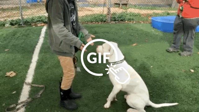 Dog who ran with coyotes learns to shake hands
