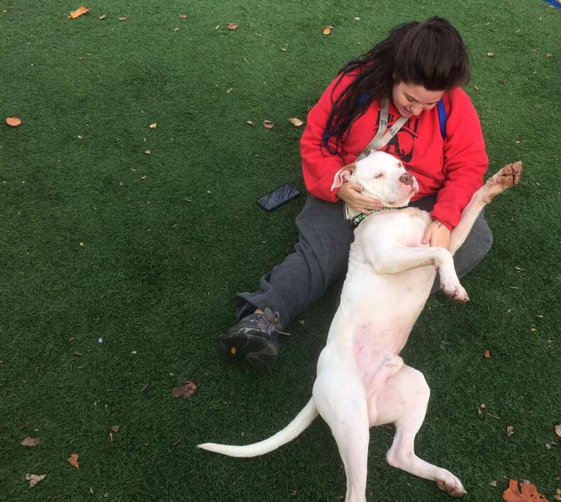 Dog who ran with coyotes relaxing at rescue center