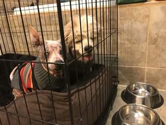 senior dogs rescue