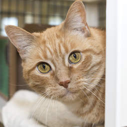 Senior shelter cat waiting for two years for a family