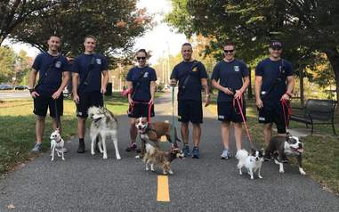 Firefighters walking shelter dogs in Arlington, Virginia